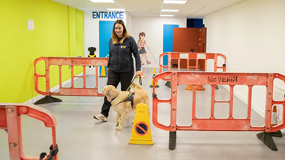 GDT training a dog to navigate around barriers