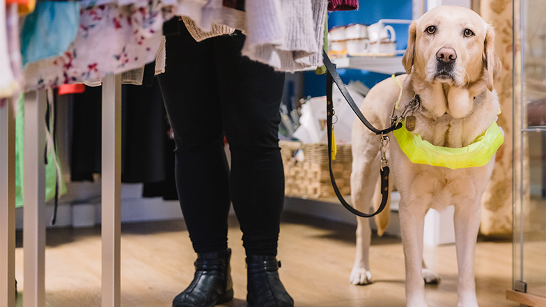 Yellow labrador guide dog guides person with sight loss through a shop