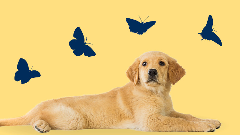 Puppy laying down with images of blue butterflies above