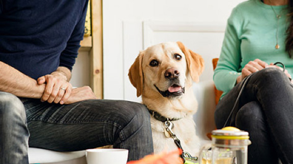 Guide dog sitting between 2 people in a cafe