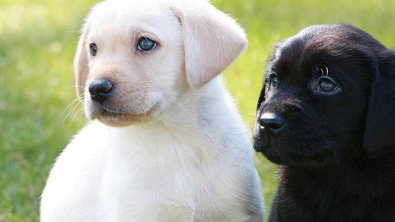 Black and white puppies sit side by side