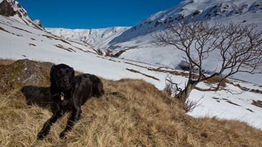 Black dog sitting on grass with snow covered hills in the background
