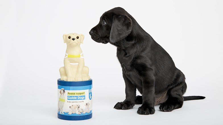 Guide Dog puppy looking at donation box