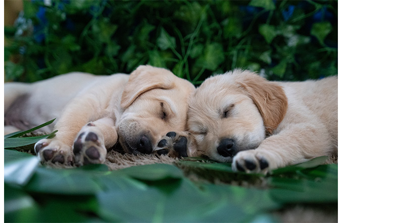 Puppy Ant and Dec sleeping together