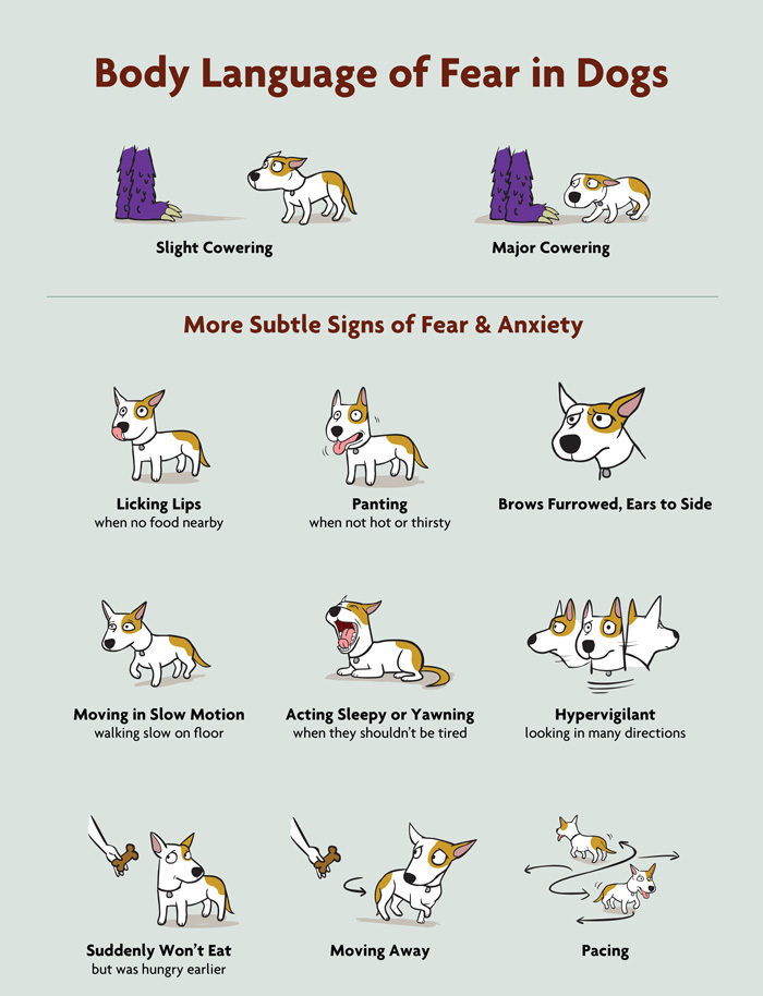 Poster that shows fearful body language in dogs