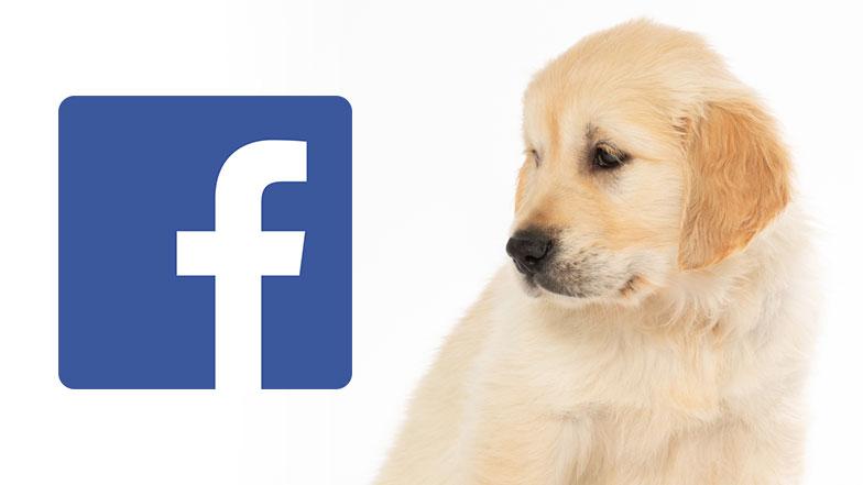Bailey Facebook Icon