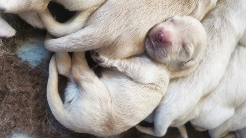 Bailey asleep on his siblings