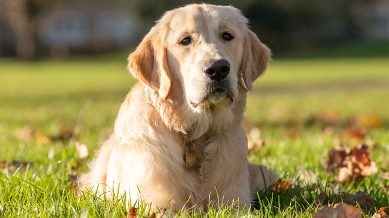 Bailey on the grass