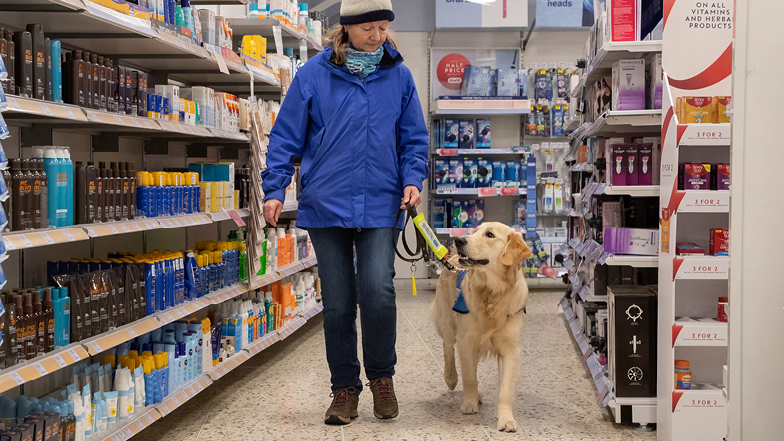 Bailey in a pharmacy with his Puppy Walker