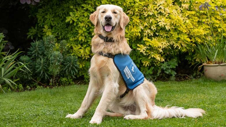 Bailey wearing blue puppy jacket