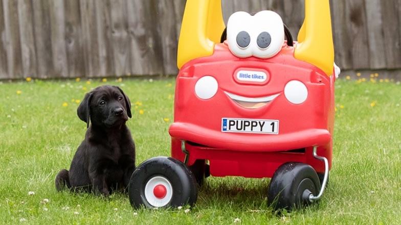 Comet sitting next to an outdoor plastic toy car