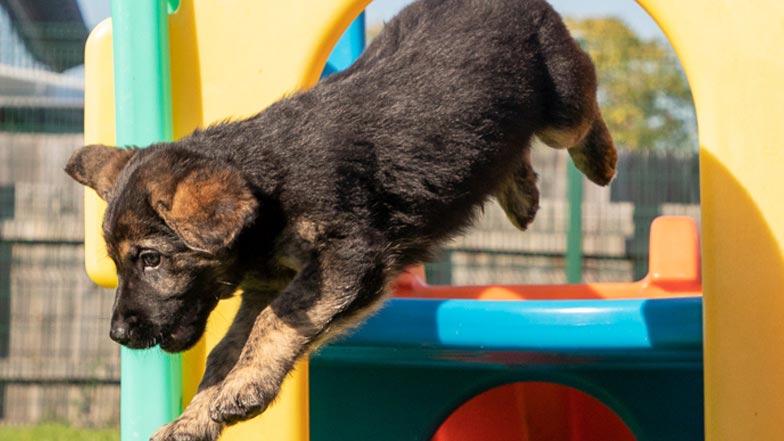 Fletcher jumping off a play tower