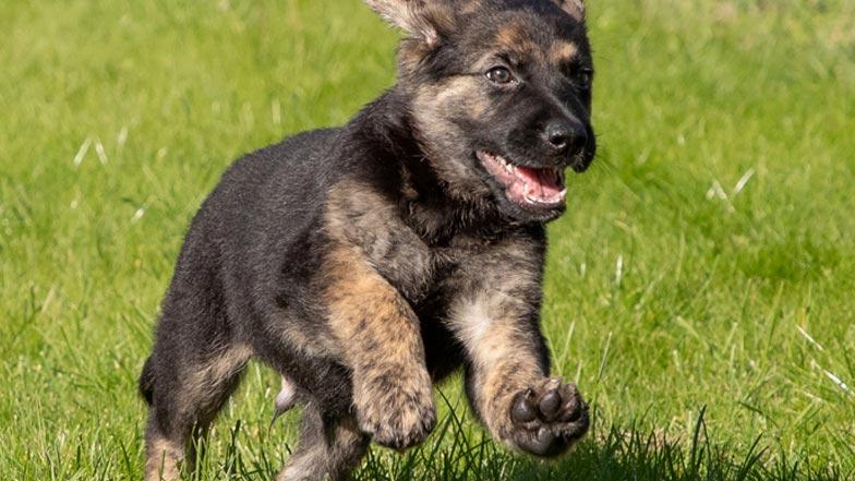 Fletcher running through grass
