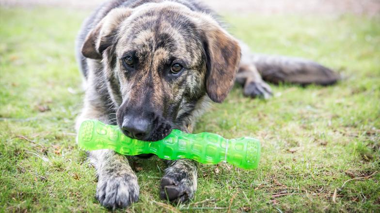 Fletcher with a chew toy