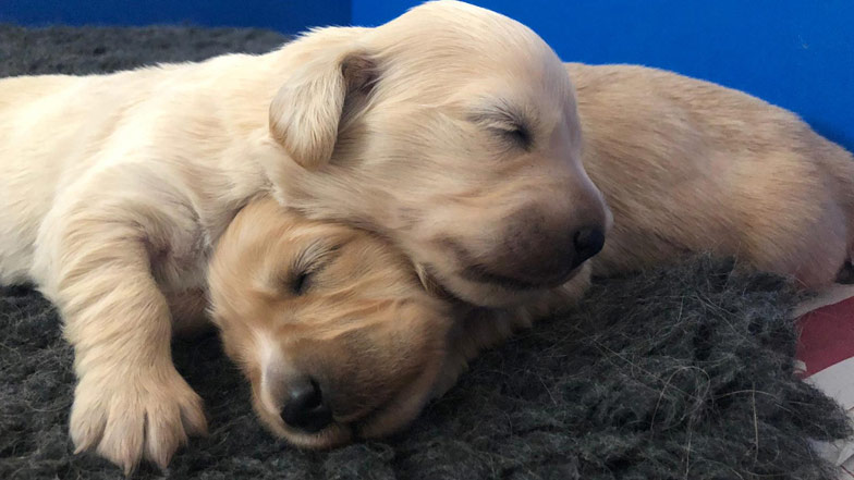 Ginger sleeping with her sibling