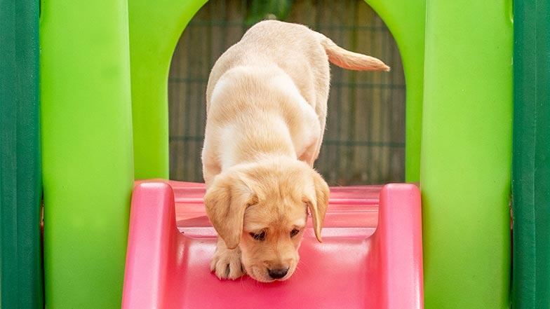 Hope going down a plastic slide