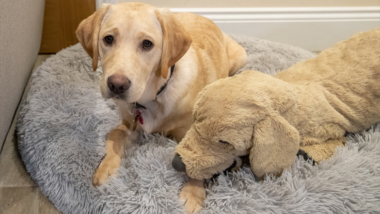 Hope in her bed with her toy puppy