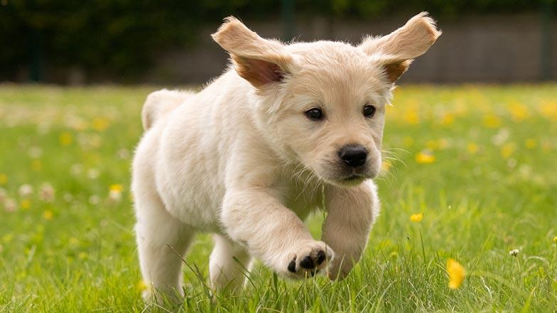 Kevin running in the grass towards camera
