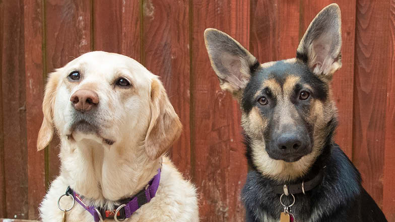 Lily and her puppy pal Ursi looking at the camera