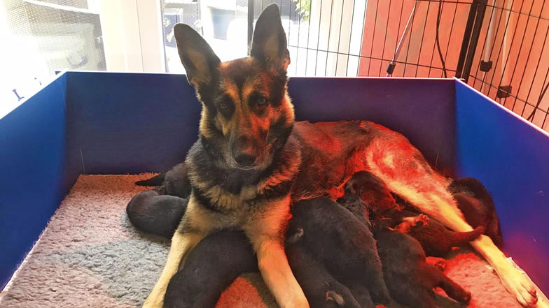 Lily and her siblings with her mum