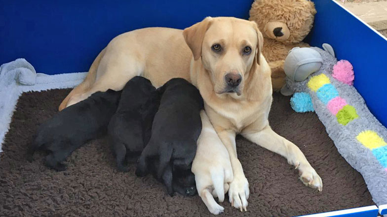 Marley with his mum and litter