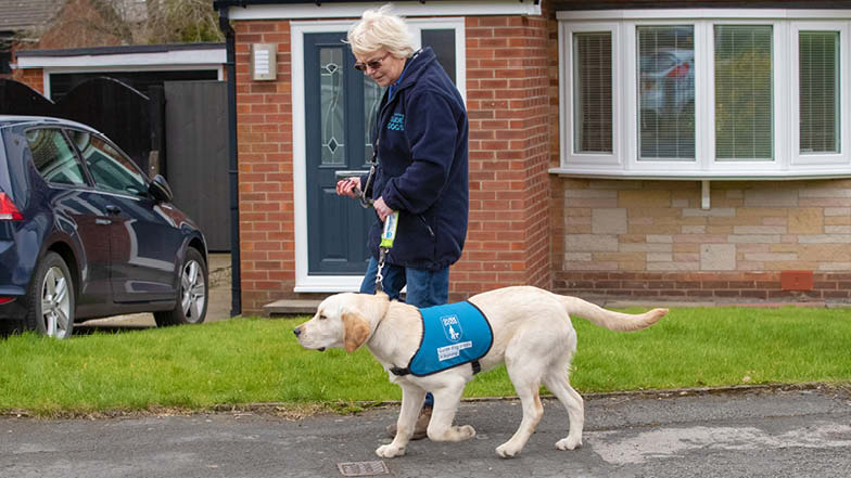 Murphy walking along a pavement in his blue puppy jacket
