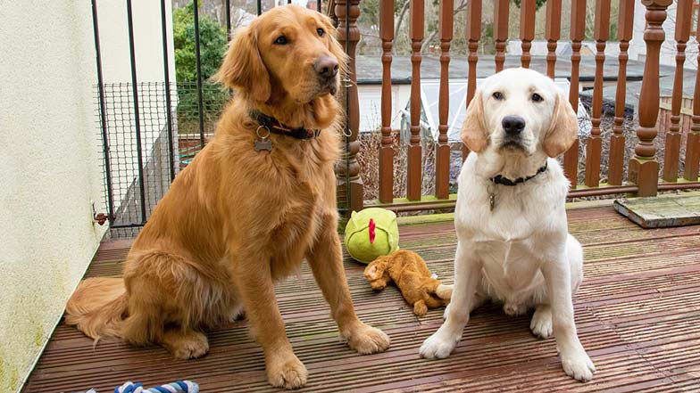 Murphy with his puppy pal Casper