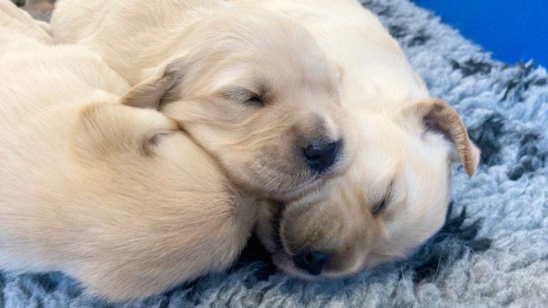 Murphy asleep with his siblings
