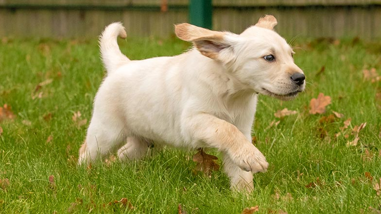 Murphy running through the grass