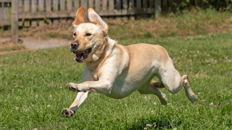 Poppy free running