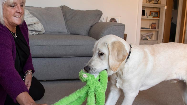 Spirit and puppy walker Jacki playing tug of war with a green monkey toy