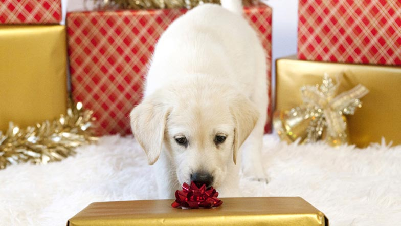 Spirit sniffing a Christmas present