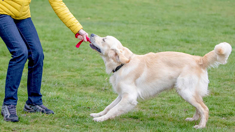 Sprout playing tug of war