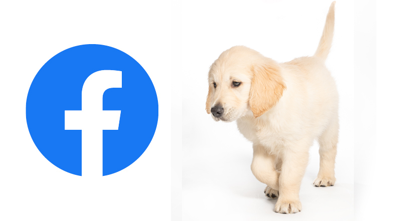 Sprout looking at a Facebook logo