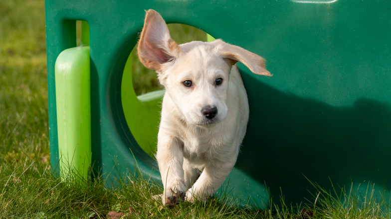 Willow running through a plastic playhouse