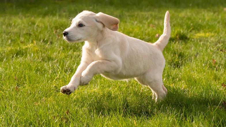 Willow running through the grass