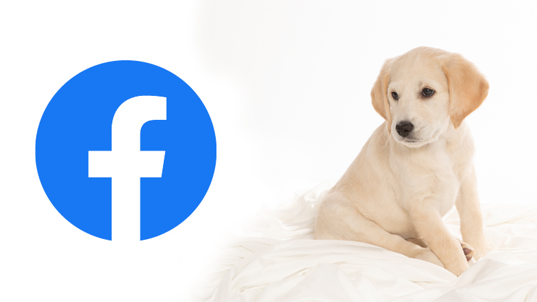 Willow looking at Facebook icon