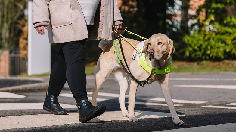 Guide dog owner and dog crossing a road