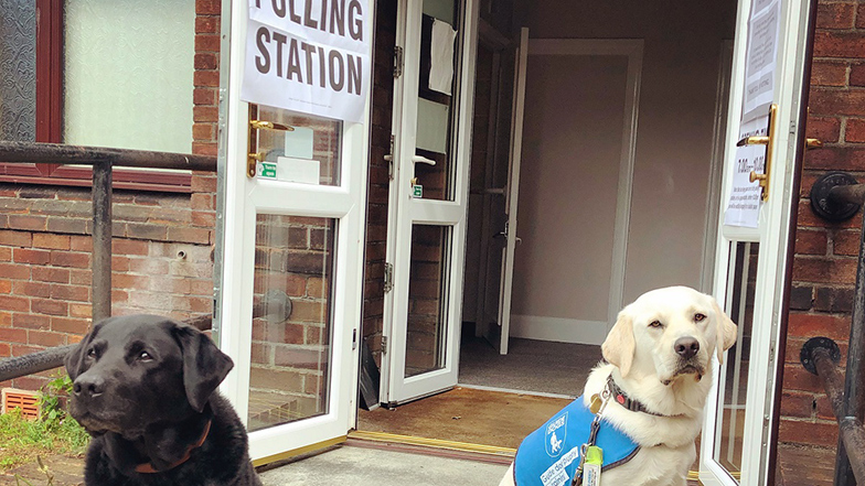 Two guide dogs sitting outside a polling station