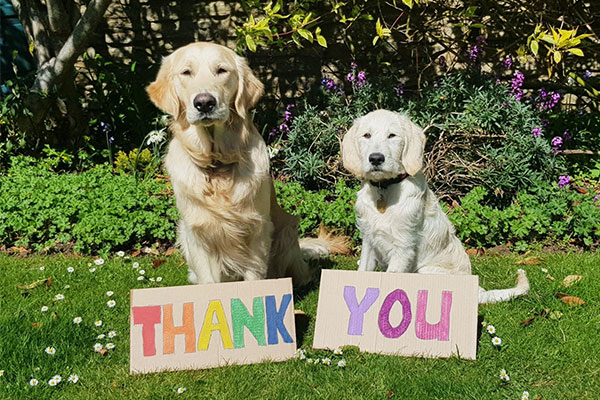 Two guide dogs sit with a colourful thank you sign in front of them