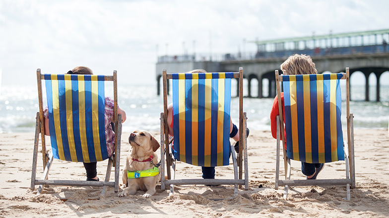 Three people sitting in deckchairs on the beach with a guide dog lying beside them
